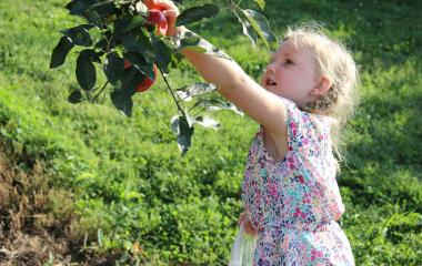 Challenges of Growing Fruits