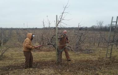 What's Happening In The Orchard? – February 2019