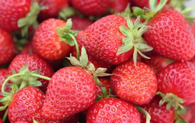 Strawberries - 5 reasons to grow, 5 reasons to consume
